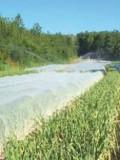 """Les semences de base sont protégées par des filets """"insect-proof"""" pour éviter toutes contaminations virales transmises par les insects."""