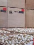 """Les semences sont ensuite mises à sécher dans des """"tours"""" de séchage avec ventilation, dynamique ou forcée."""