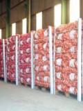 Les semences sont calibrées, identifiées et tracées et elles sont donc prêtes à être livrées aux Paysans du Sud Ouest.